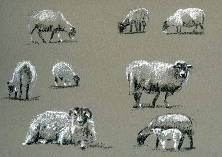Drawing, pastel, sheep, ewes