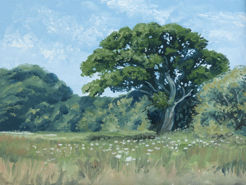 tree wales painting nevern
