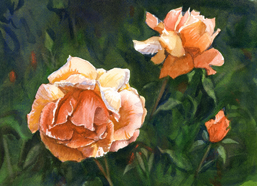 roses, watercolour