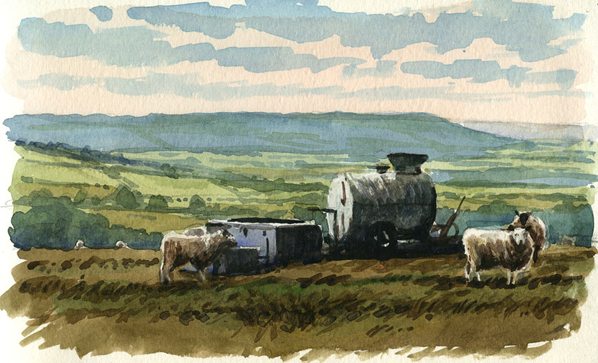 sheep, dorset, watercolour