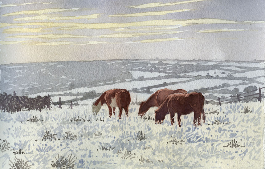 Cattle, Co Clare, Ireland, Eire, Watercolor, watercolour, painting