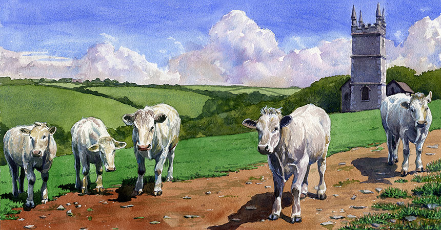 Cattle, cornwall, watercolour